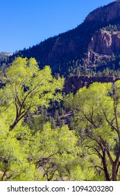 Tall cottonwoods and pine-forested palisades line the Rio Grande and the road to Creede in the San Juan Mountains of southern Colorado