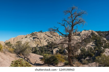 Tall dead tree stands in the bowl of a canyon surrounded by rock boulders and cliffs.
