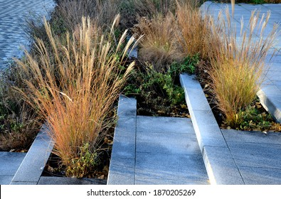 tall dry stalks of ornamental grasses in a flowerbed by the road perform a decorative function even in winter if the sun's rays illuminate them - Shutterstock ID 1870205269