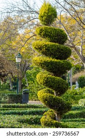 Tall elegantly trimmed tree in a park