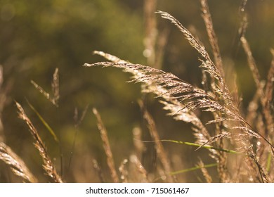 Tall field grass sparkles during an autumn sunset