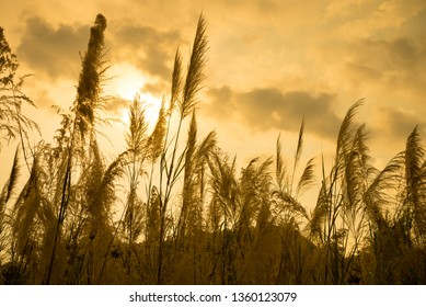 Tall flowers grass in forest with golden sunlight sunset evening and breeze wind. Beautiful nature background for your relaxation, peace, meditation.