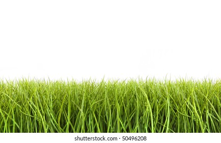 Tall grass against a white background
