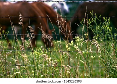 Tall grass in the foreground while horses graze in a blurred background
