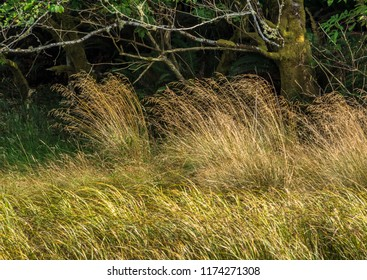 Tall grass in front of a dark wooded area photographed in summer from the Alder Island Nature Trail, Siletz Bay National Wildlife Refuge, near Lincoln City, Oregon.