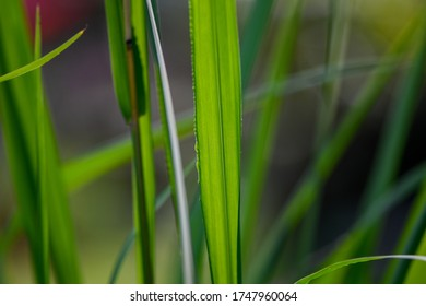Tall grass image in close up to be used as background or texture