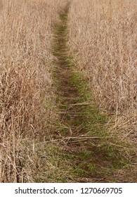 Tall Grass Pathway Autumn Hiking Trail