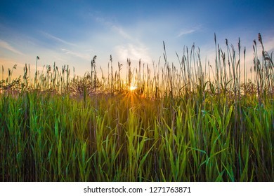 Tall grass and reeds with sunset seen from seashore of Long Island NY
