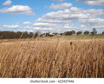 tall grass in richmond, london