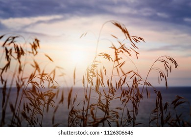 Tall grass stalks closeup against setting sun over sunset lake and sky
