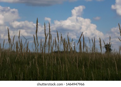 Tall grass with windmill in the background
