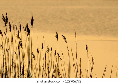 Tall Grasses at Dusk