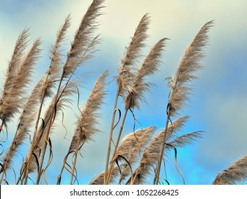 tall grasses moving in the wind, against blue and white sky