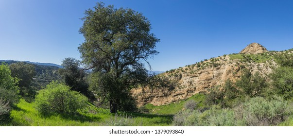 Tall green oak tree grows in the midst of rocky canyon in southern California wilderness.