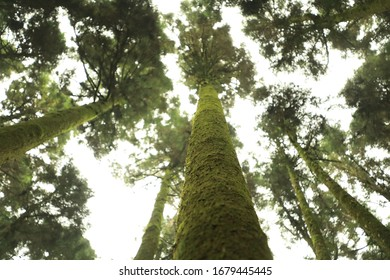 tall green rich trees reaching the sky