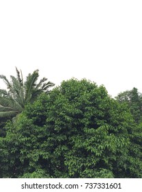 The tall of green trees scenery from the highest peak of a university building class in Indonesia. This scenery seems a minimalist color photo tone.