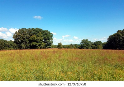 Tall hay field tipped in red