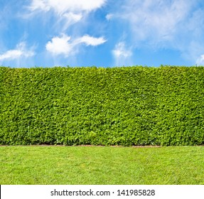 Tall hedge, endless seamless pattern, tall hedge with sky and grass