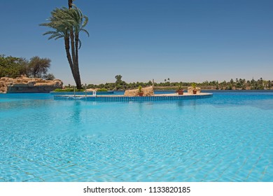 Tall large date palm tree phoenix dactylifera in infinity swimming pool at luxury tropical hotel resort
