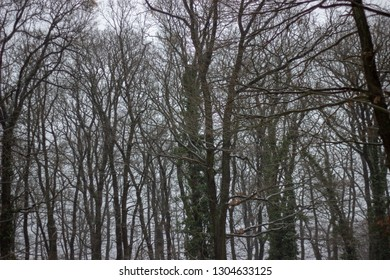 tall leafless brown trees in the forest there is nobody and it has sad and depressed expression
