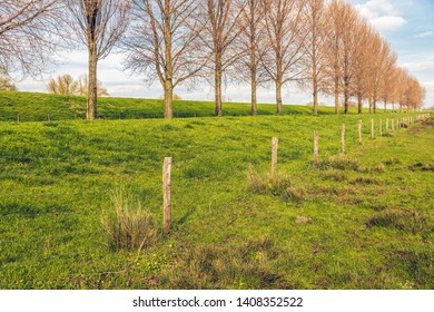 Tall leafless trees and a fence in a long line along a Dutch dike. The photo was taken in the spring season near the village of Hooge Zwaluwe, Drimmelen, North Brabant.