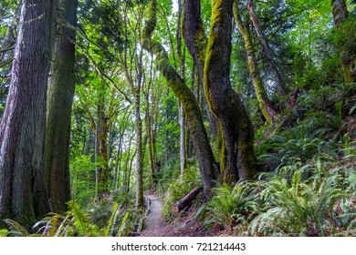 tall mossy trees over a path