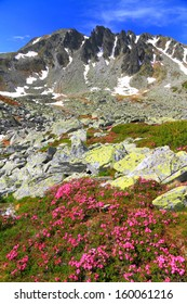 Tall mountains covered with pink flowers in summer