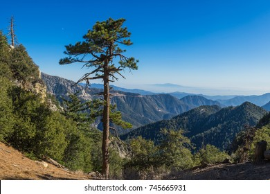 Tall narrow pine stands on the edge of a cliff overlooking the mountains of Angeles National Forest.