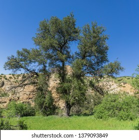 Tall oak tree stands in the midst of a narrow rock valley in southern California.