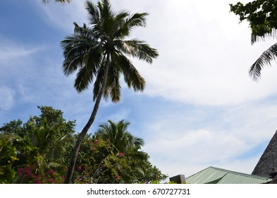 Tall palm tree in tropical sky