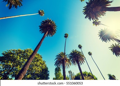 Tall palm trees in Beverly Hills, California
