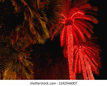 tall palm trees decorated with red lights as Christmas lights. In addition, the fresh green of evergreen plants in December on Tenerife (Canary Island).