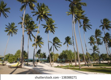 Tall palm trees in the sand of the beach in Zanzibar
