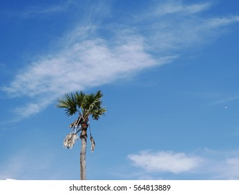 Tall palm trees and sky