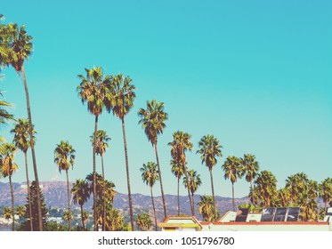 Tall palm trees with world famous Hollywood sign on the background, Los Angeles. Southern California, USA