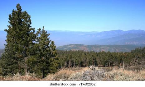 Tall pine on a mountain top, California