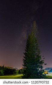 Tall pine tree against the night sky filled with stars
