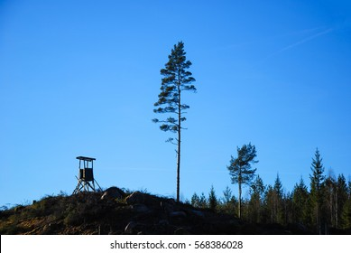 Tall pine tree and a hunting tower on the top of a hill