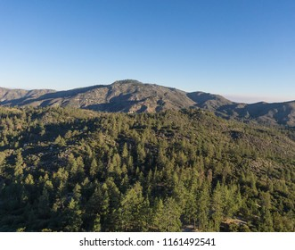 Tall pines cover the mountain tops in the Angeles National Forest of California.