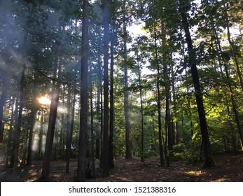 Tall pines near Broken Bow
