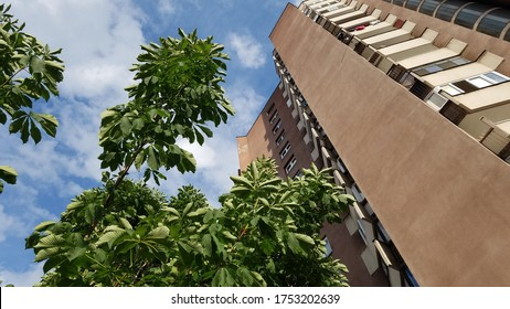 Tall red apartment block built during the Yugoslav times in Zenica, Bosnia and Herzegovina, now with a chestnut tree in front of it shot from the bottom with sky in the background.
