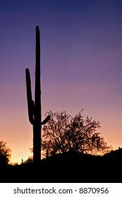 Tall Saguaro Silhouette.