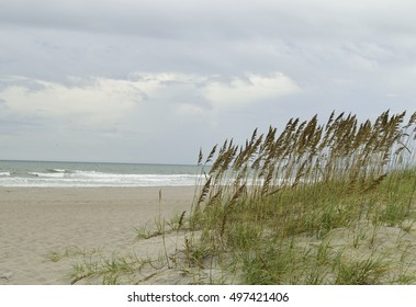 Tall sea oats on the sand dunes at the beach.