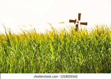 Tall thicket grass meadow at countryside, silhouette rotor blades of rusty windmill at horizon (copy space)