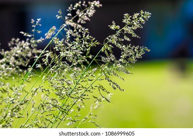 Tall tips of grasses kissed by sunlight whiile growing outdoors.