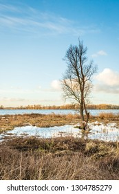Tall tree with bare branches in a marshy area with yellowed reeds. The photo was taken in the Dutch National Park Biesbosch, Werkendam, North Brabant.