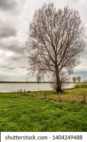 Tall tree just budding on the flood plain of the Dutch river Bergsche Maas near the village of Dussen, North Brabant. It is a cloudy in the spring season.