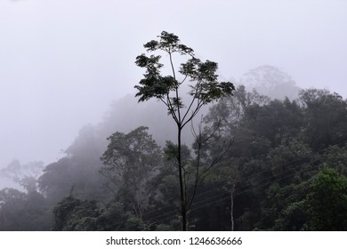 tall tree in misty clumsy sky