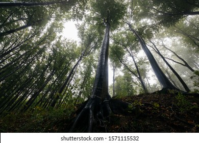 tall tree in natural forest dramatic wide angle view during rain