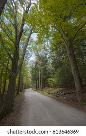 Tall tree in the rural country road, Vermont, USA